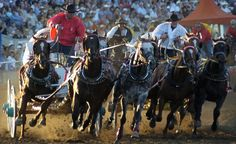 calgary stampede - Google Search Calgary, Horses, Google Search, Horse