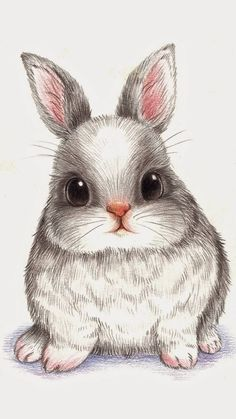 萌 兔 彩 铅 conejos bunny drawing, rabbit drawing и draw Animal Drawings, Cute Drawings, Drawing Sketches, Pencil Drawings, Drawings Of Cats, Bunny Sketches, Colorful Drawings, Animal Paintings, Bunny Drawing