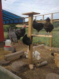 Chicken Roosting Ideas