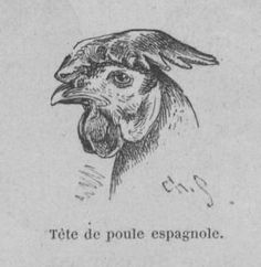 Tête de poule espagnole. Basse-cour, faisanderie et volière : l'élevage à la Croix-verte, Autun, par Et. Lagrange,... Nouvelle édition. 1892.