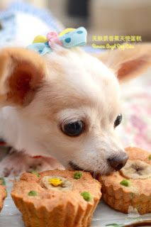 The Furry Bakers: 无麸质狗狗天使蛋糕 Furry Angel Cupcakes.for my Chihuahua Lil Chloe Food Pictures, Chihuahua, Chloe, Sweet Tooth, Food Photography, Corgi, Cupcakes, Angel, Animals