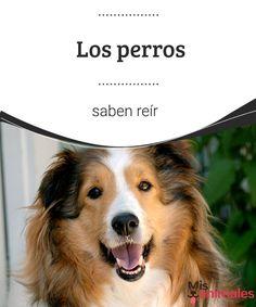 Los perros saben reír   ¿Te has preguntado alguna vez si los perros saben reír? En este artículo te hablamos sobre este curioso fenómeno. ¡No te lo pierdas! #sonreír #perros #saber #curiosidades