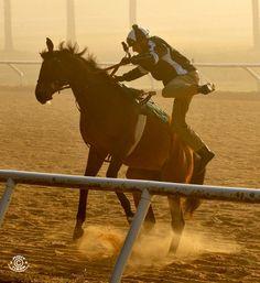 Racehorses let me go!!