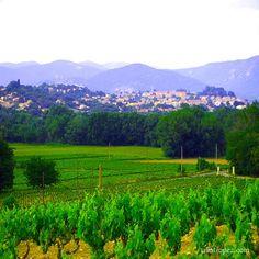 Saint Tropez vineyards view from Villa Tropez Natural Stone Flooring, Open Plan Living, Oak Tree, Natural Stones, Sailing, Vineyard, Cruise, Villa, Saint Tropez
