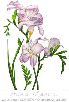 Sweet freesias smell AMAZING and, with so many bright colours to choose from, are a great choice to paint!