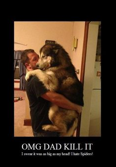 if everything else fails, hug a dog