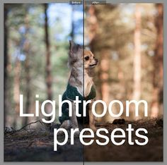 My Presets for Lightroom 4 - Roman Peregontsev - graphic designer and photographer Photoshop Actions, Lightroom Presets, Graphic Design, Pictures, Photography, Animals, Picture Ideas, Roman, Lens
