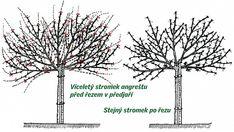 řez keříčkového angreštu Metal Tree Wall Art, Tree Sculpture, Tree Art, Dandelion, Interior, Flowers, Plants, Beauty, Home Decor