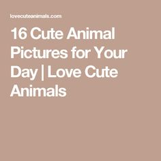 16 Cute Animal Pictures for Your Day | Love Cute Animals