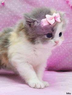 Cute White Fluffy Kittens Pictures, Cute Animals Just Born during Cute Kittens And Puppies Cuddling Cute Fluffy Kittens, Kittens Cutest Baby, Kittens And Puppies, Cute Cats And Kittens, Baby Cats, Funny Kittens, Adorable Kittens, Adorable Babies, Pretty Cats