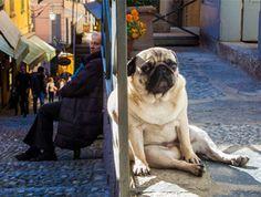 Prendre une belle photo de son chien demande agilité et réactivité. Mais pas seulement ! En effet parfois, le hasard fait bien les choses... Grâce à une…