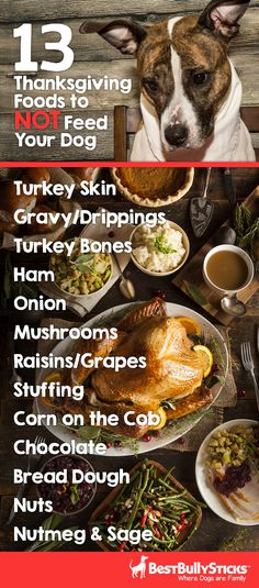 Did you know your Turkey Day dinner table is lurking with ingredients harmful to dog? Be mindful and keep your pet safe this holiday!