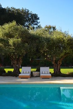 12 SUMMER-WORTHY POOLSCAPES - #11 Gnarled olive trees provide the perfect frame for poolside lounging. Design by Greenblott landscaping.