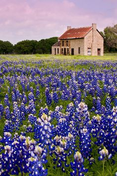Marble Falls bluebonnet season usually peaks in April. Looking for a quick and easy getaway from Austin? These are the best day trips from Austin Texas you'll want to take next with tips on what to do and more // Local Adventurer #texas #texplorer #localadventurer #traveltexas #roadtrip #visittheusa