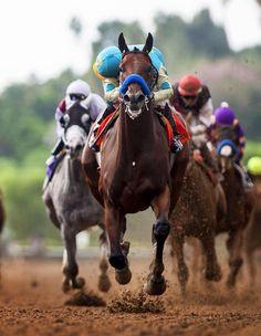 Buy CALCULATOR FrontRunner S. behind the triple crown American Pharoah at online store Derby Horse, Triple Crown Winners, American Pharoah, Thoroughbred Horse, Clydesdale Horses, Breyer Horses, Sport Of Kings, Horse World, Racehorse
