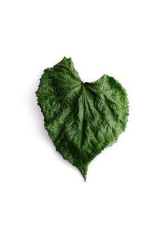 rumpled heart   STILL (mary jo hoffman)