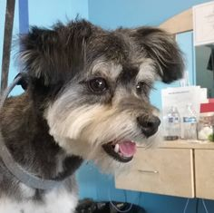 Sally #tucsondoggrooming #wagsmytail #doggroomer A well groomed dog is a well loved dog! Call us today to schedule your dog grooming appointment 520-744-7040
