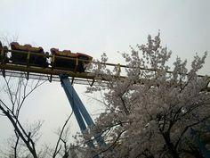 벚꽃과 롤러코스터
