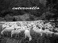 intervallo_ RAI-PECORE