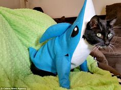 Cool costumes:Fawkes looks a little startled dressed in a shark cosplay suit made by the U.S. designer