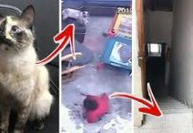 Cat credited with saving baby from falling down the stairs Cat credited with saving baby from falling down the stairs Falling Down, Little Boys, Stairs, Cleaning Tips, Cats, Crock Pot, Steak, Pork, Animals
