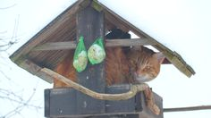 The Cat in the birdhouse :-) Bird Houses, Outdoor Decor, Home Decor, Homemade Home Decor, Birdhouses, Nest Box, Nesting Boxes, Decoration Home, Birdhouse