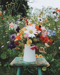 Flower Farm, My Flower, Flower Pots, Flowers Nature, Wild Flowers, Happy Flowers, August Colors, Flower Aesthetic, Planting Flowers