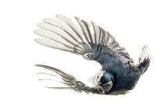 Paul Nelson's photographs of birds via Slate