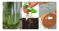 8 Verdure che puoi comprare una volta sola e coltivarle all'infinito sul tuo terrazzo Se sei alla ricerca di un'idea green semplice da realizzare, ti propo