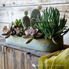 Idées déco / Des cactus dans la maison /