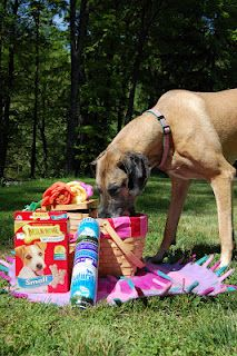 Petagogy lets us know what to look for in our pet's food in this blog.