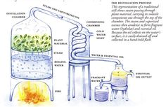 Good info for complete distillation vs. First Distillation. Which one is better, how do you define different distills, how it all works? Most information you read is incorrect. I...