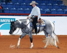 Gorgeous western pleasure horse. Now if only that tail was real.