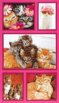Robert Kaufman Fabrics: Cat Crazy by Avanti Press, Inc.: Cotton Novelty Print Fabric