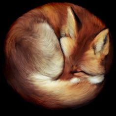 curled up fox - Google Search