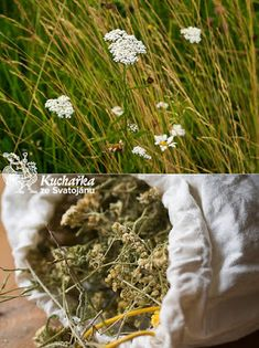 Dandelion, Herbs, Flowers, Plants, Gardening, Dandelions, Lawn And Garden, Herb, Plant