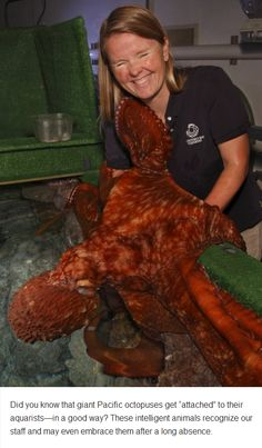 "Octopus affection. I don't even know where to file this, but I love them so much. They are one of my favoritie things to ""hang with"" at the zoo"
