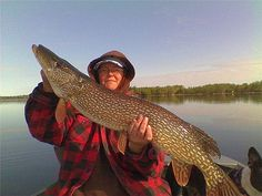 Laura Love holds up this 20.2 pound northern pike.    Fishing has always been a sport associated with men, however now women are stepping up and getting involved in a big way:  http://www.worldfishingnetwork.com/users/gary/blog/moving-the-sport-forward-more-women-more-fish-more-fun-236306.aspx