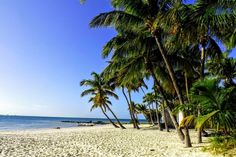 Key West Beach & Palm Trees, Florida | Travel Guide to Florida - Discover the Best Beaches | USA Backpacker Travel Guide by Hibiscus & Nomada