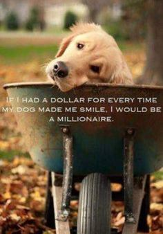 Now this is so true. I love my dog family 💜 Love My Dog, Puppy Love, Cute Puppies, Cute Dogs, Dogs And Puppies, Doggies, All Dogs, Funny Dogs, Animals And Pets