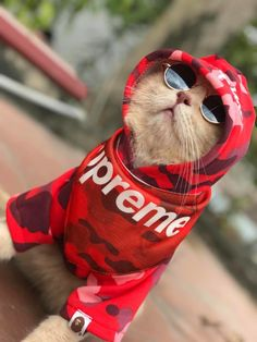 Costumed Cat, Named Dog, Is Vietnam's Master Fish Vendor Cute Baby Cats, Cute Kittens, Cute Cats And Dogs, Cute Little Animals, Baby Dogs, Cool Cats, Cats And Kittens, Cute Animal Videos, Funny Animal Pictures