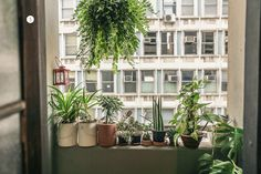 Indoor Window Container Garden - Dindi Hojah