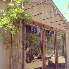 Wisteria finds a home by Steve's studio... Soon to be hanging on the rebar trellis above his doors. #patinafarm