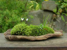 小さな緑のインテリア 苔屋 #mossgardenindoor