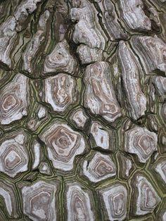 Nature Pattern Texture Grey Ideas For 2019 Natural Structures, Natural Forms, Natural Texture, Patterns In Nature, Textures Patterns, Nature Pattern, Arte Yin Yang, Nature Tree, Texture Art