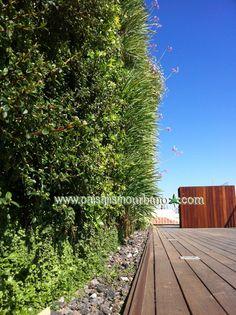 Jardines verticales realizados por Paisajismo Urbano en una azotea privada en Murcia