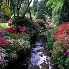 Bodnant Gardens, Conwy, Wales, UK | River banks covered in kaleidoscopic colors of azaleas (15 of 15) by ukgardenphotos, via Flickr
