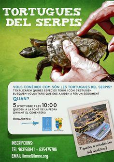 Una nova localitat es suma al seguiment de tortugues! Este mes d'octubre comencem un nou punt d'estudi a L'Alqueria d'Asnar