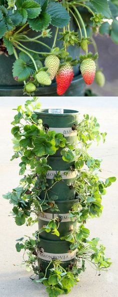 Make an easy DIY strawberry tower with a built-in reservoir, using recycled materials! This productive vertical container garden can grow 48 plants in 2 square feet, great for patios and small space! Lots of tips and 5 lessons we learned from last year!