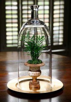 small parlor palm in tall cloche on gold charger #terrarium (photo via john everett)